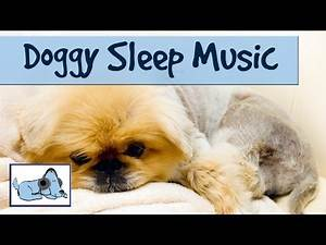 Music for Dogs to go to Sleep, Dog Anxiety Treatment