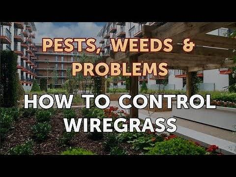 How to Control Wiregrass