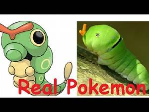 TOP 15 POKEMON IN REAL LIFE | REAL POKEMON GO | CATCH' EM ALL !