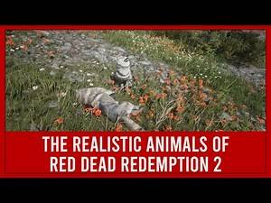 Realistic Details of Red Dead Redemption 2: Animals #2 - RDR2
