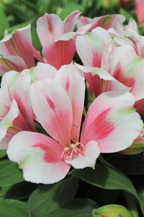 AmazingFlower-Bouquets