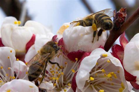 Bees-PollinateFlowers