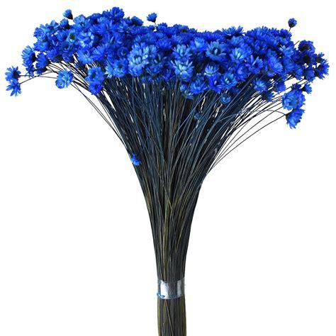 BlueDried-Flowers