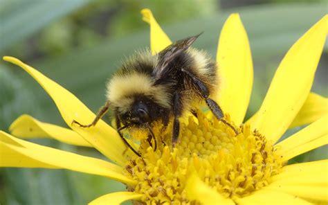 Bumble-Bee-Plants