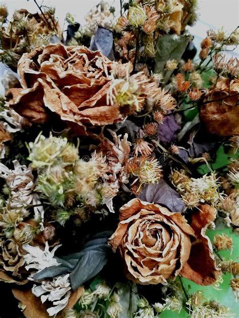 Dried-FlowerBunch