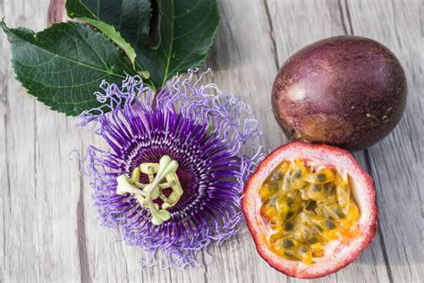 Edible-PassionFruit-Flower
