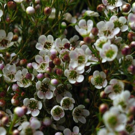 Flowering-GardenPlant-Flower