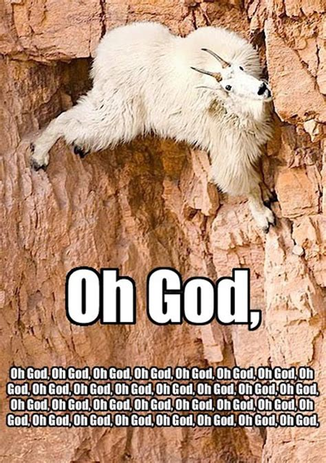 Funny Rock Climbing Goat