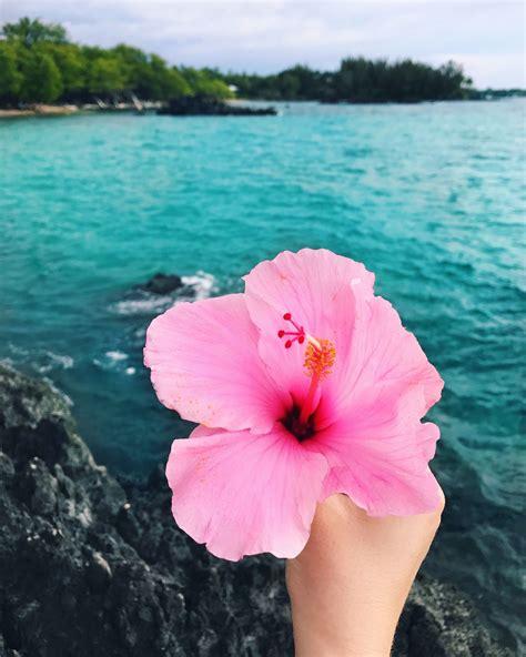 Hawaiian-FlowerAesthetic