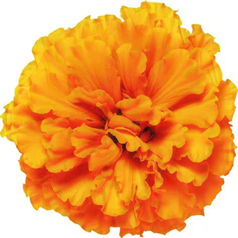 Marigold-FlowerArt