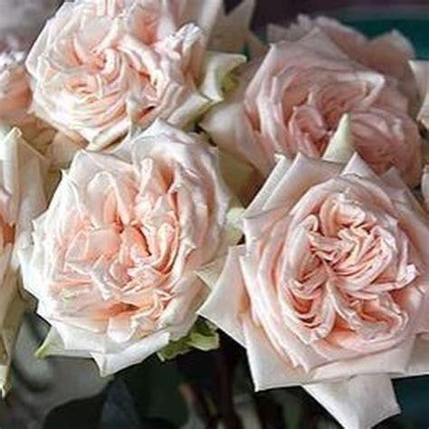 PeachRose-Bouquet