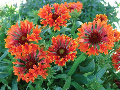 Perennial-Flowersand-Plants