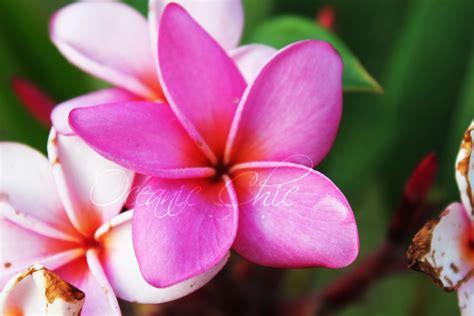 PrettyHawaiian-Flowers