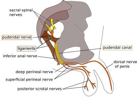 Pudendal Neuralgia