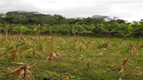 Santa-Maria-FlowerField