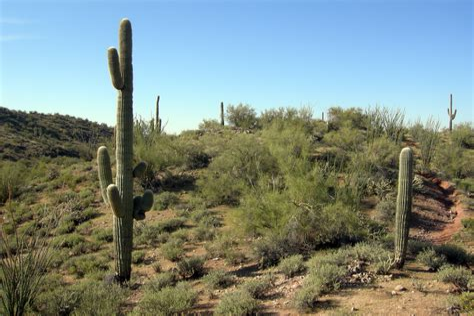 Sonoran-Desert-Wildflowers