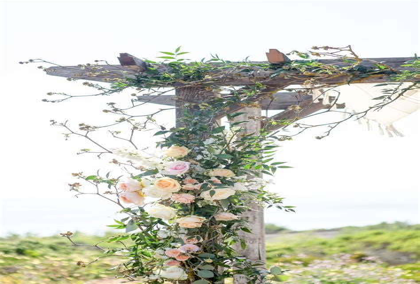 TylerRose-Garden