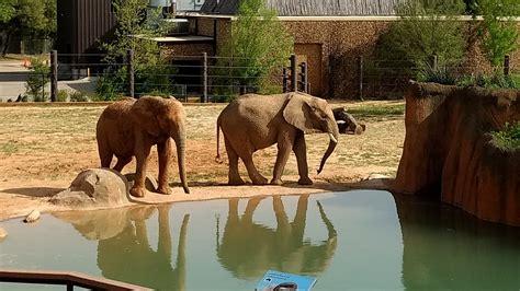 TylerTexas-Zoo