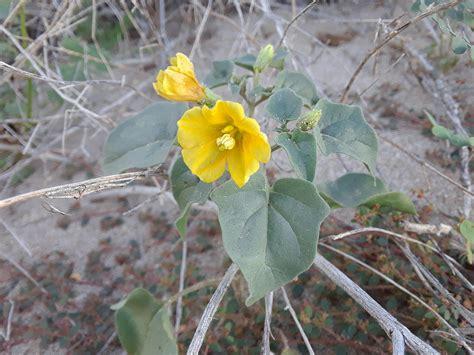 Yellow-DesertFlowers-Arizona